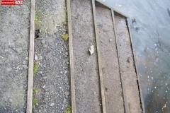 Spływ kajakami rzeka Bóbr Dębowy Gaj 10