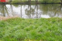 Spływ kajakami rzeka Bóbr Lwówek Śląski 05