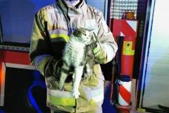 Strażacy uratowali kota uwięzionego na dachu kościoła 6