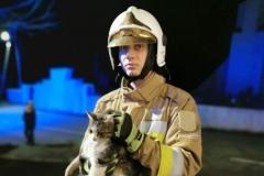 Strażacy uratowali kota uwięzionego na dachu kościoła 7