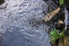 Zanieczyszczenei rzeki w Wojciechowie 4