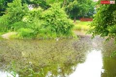 Park Miejski w Lwówku Śląskim 3