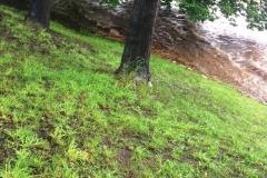Mirsk wezbrane stany rzek podtopienia 17