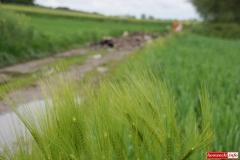 Odpady pomiędzy łanami zbóż 09