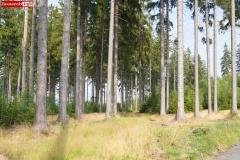 Okole Góry Kaczawskie Lubiechowa 19