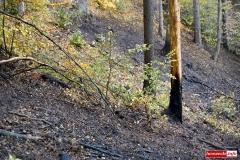 pożar lasu 06