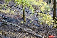 pożar lasu 09