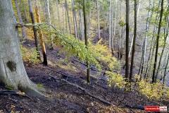 pożar lasu 10
