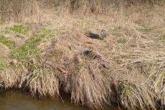 Rębiszów - dzikie wysypisko śmieci 05