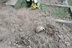 Rozkopany grób na cmentarzu w Lwówku Śląskim 03