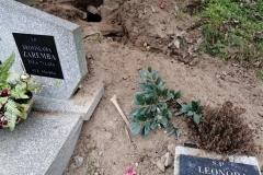 Rozkopany grób na cmentarzu w Lwówku Śląskim 06
