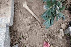 Rozkopany grób na cmentarzu w Lwówku Śląskim 07