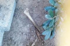 Rozkopany grób na cmentarzu w Lwówku Śląskim 15