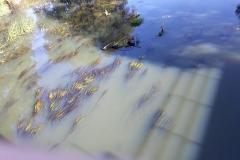 czy rzeka Bóbr umiera 01