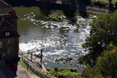 czy rzeka Bóbr umiera 08