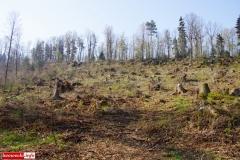 sadzenie lasu 01