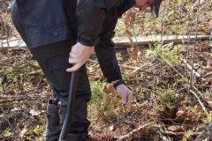 sadzenie lasu 43