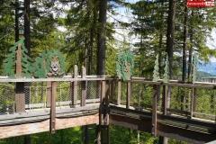 Ścieżka w koronach drzew. Karkonosze Czechy Janské Lázně  (11)