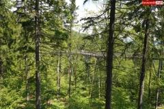 Ścieżka w koronach drzew. Karkonosze Czechy Janské Lázně  (12)