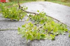 silny wiatr gałęzie na drogach 4