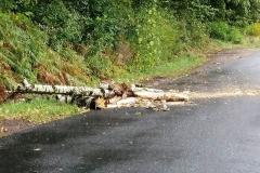 silny wiatr gałęzie na drogach 6
