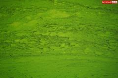 sinice-jezioro-pilchowickie-Wlen-3