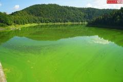 sinice-jezioro-pilchowickie-Wlen-5