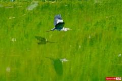 sinice-jezioro-pilchowickie-Wlen-7
