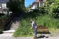 Radni wykosili trawę Świeradów Zdrój 10