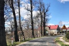Gryfów Śląski Wieża DW360 drzewa 4