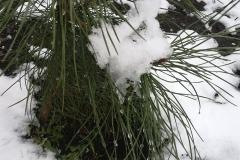 załamanie pogody śnieg 5